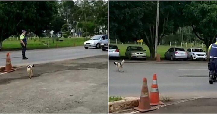 cane attraversa la strada