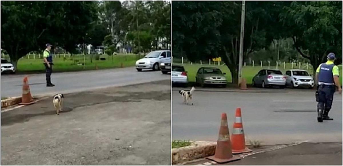 dog crosses the road