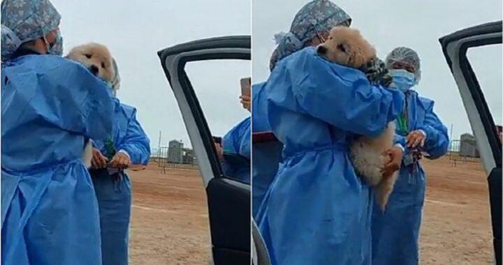 cane con il proprietario a fare il vaccino