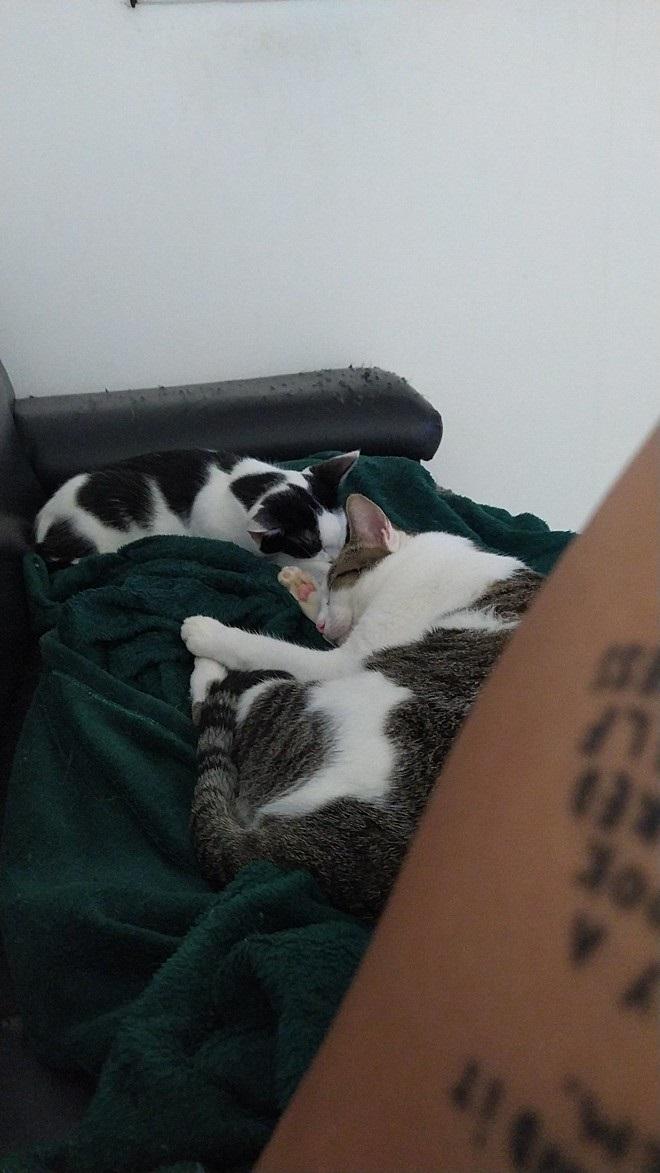 Micio comodo sul divano