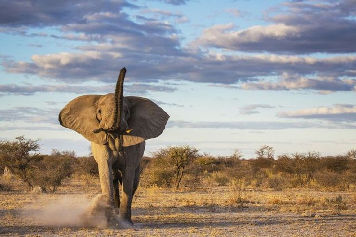 elefante grigio