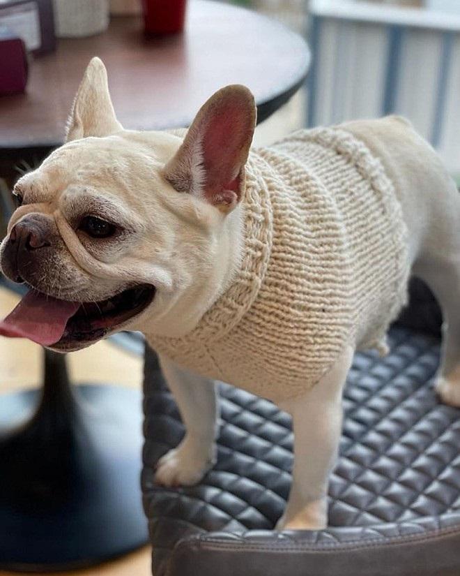 vestiti per cani lavorati a maglia