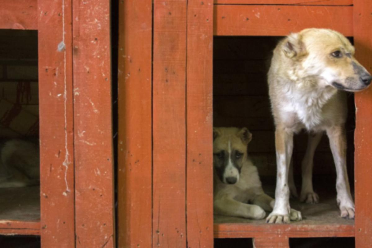 66 cani salvati