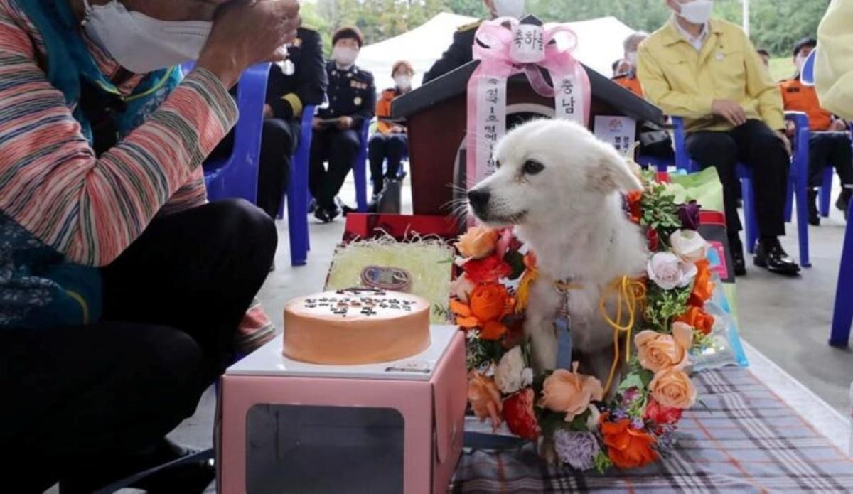 Baekgu saves the 90-year-old owner
