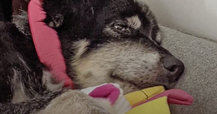 La storia del cane Belky