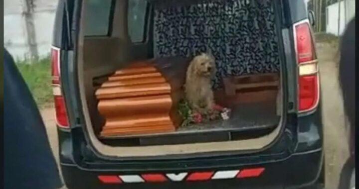 La storia commovente del cane Bumer