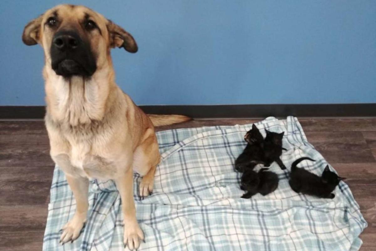 Il salvataggio di una cagnolina randagia e di 5 gattini