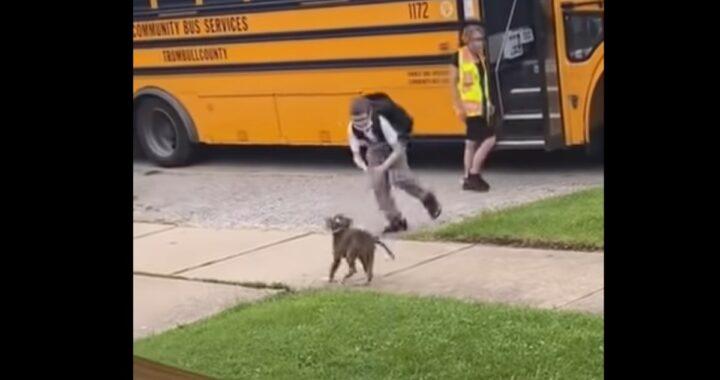 La riunione tra un cane e un bimbo che torna da scuola