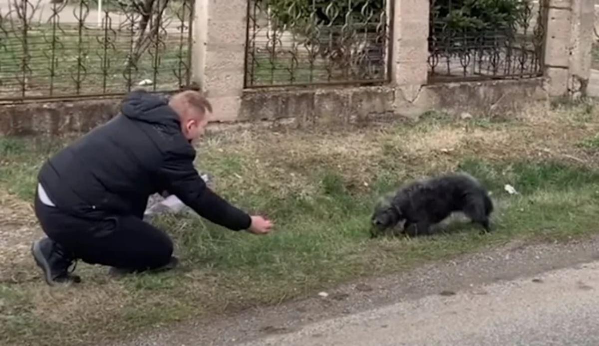 Il salvataggio di un cane randagio