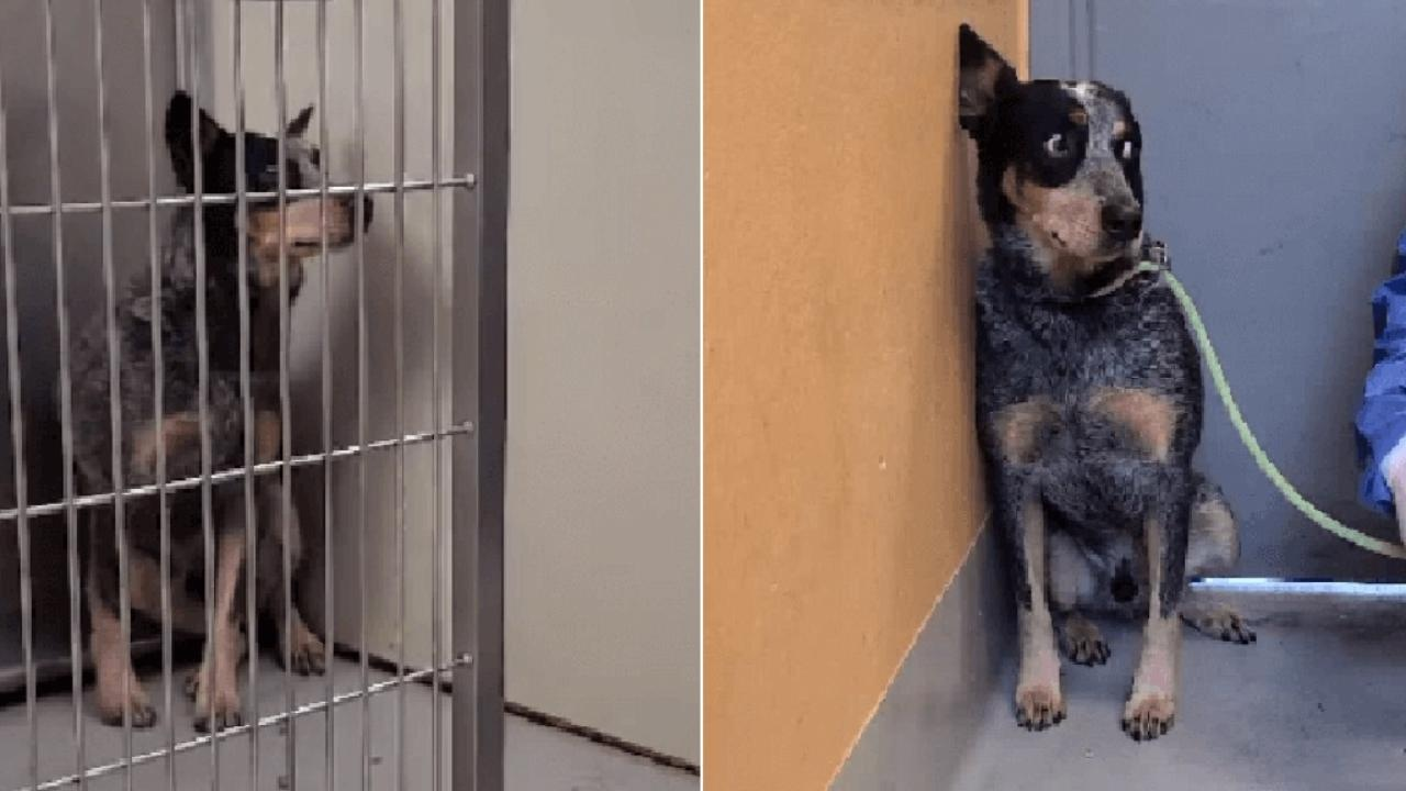 La storia del cane Cmo7