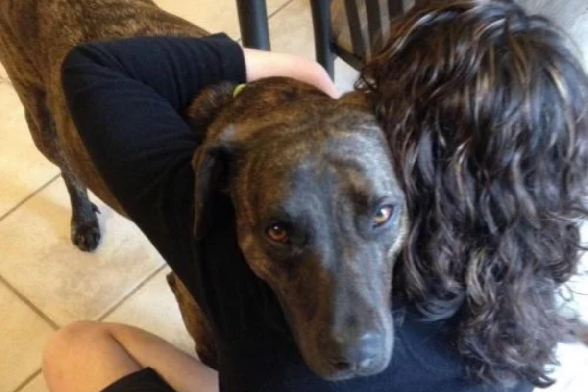 Dash, il cane dal passato triste abbraccia chiunque