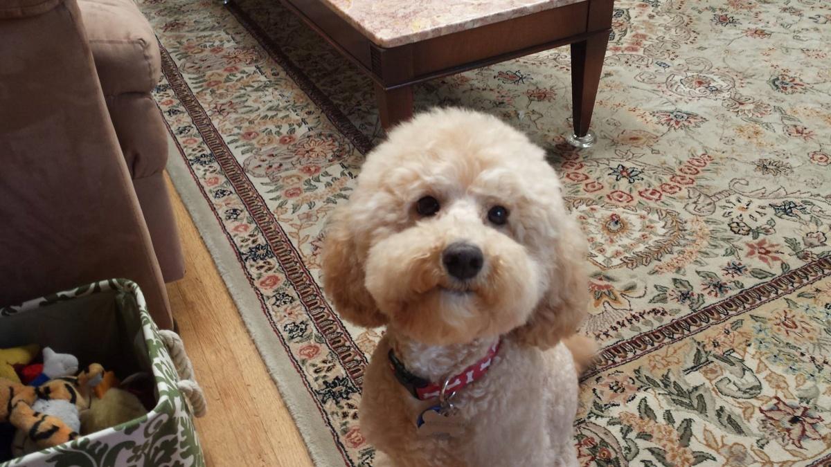 La trasformazione della cagnolina Dolly