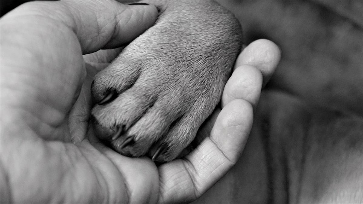 Come stanno i due cani salvati nelle campagne di Mandas
