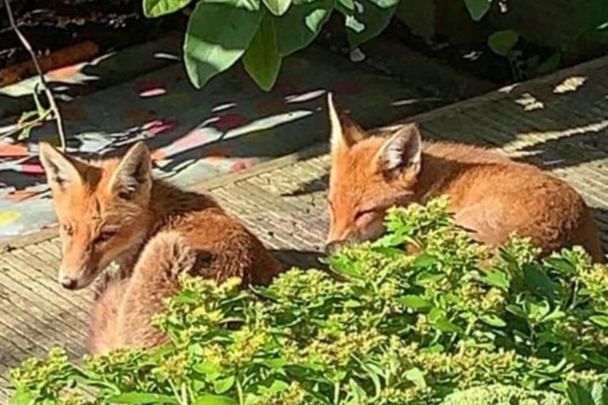 Foxy sceglie la sua nuova casa