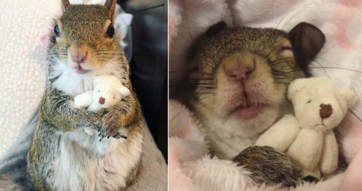 La storia dello scoiattolo Jill