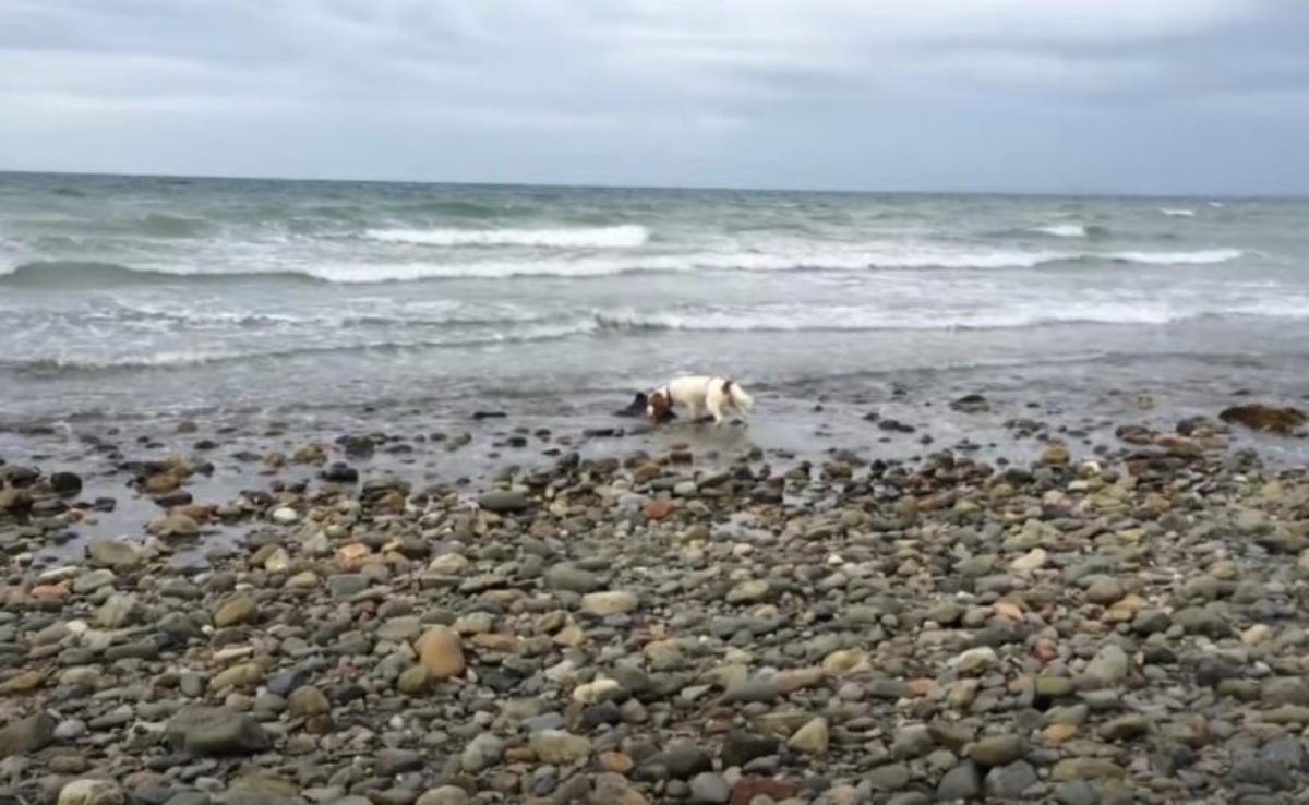 Leia e il salvataggio di un delfino spiaggiato