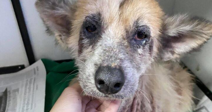 La storia della cagnolina Leila, abbandonata per strada
