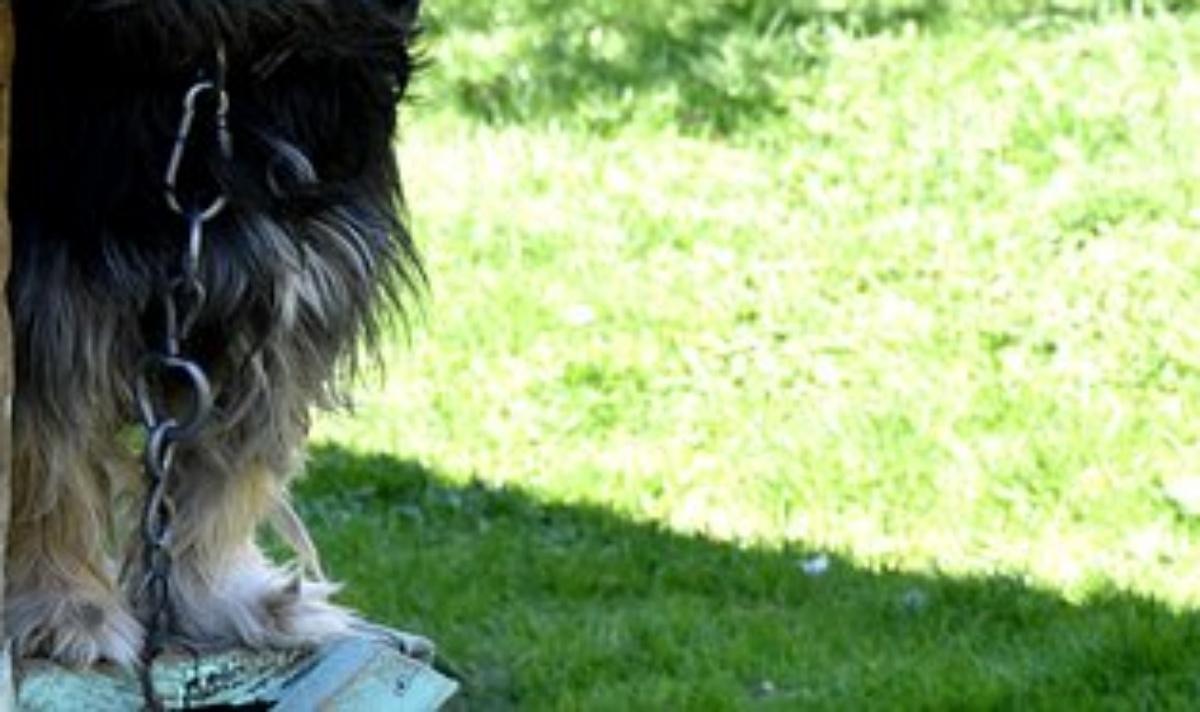 La nuova vita del cane Lucky
