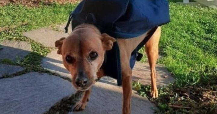 Tristezza sul web: è morto Luigi, il cane postino diventato famoso durante il lockdown