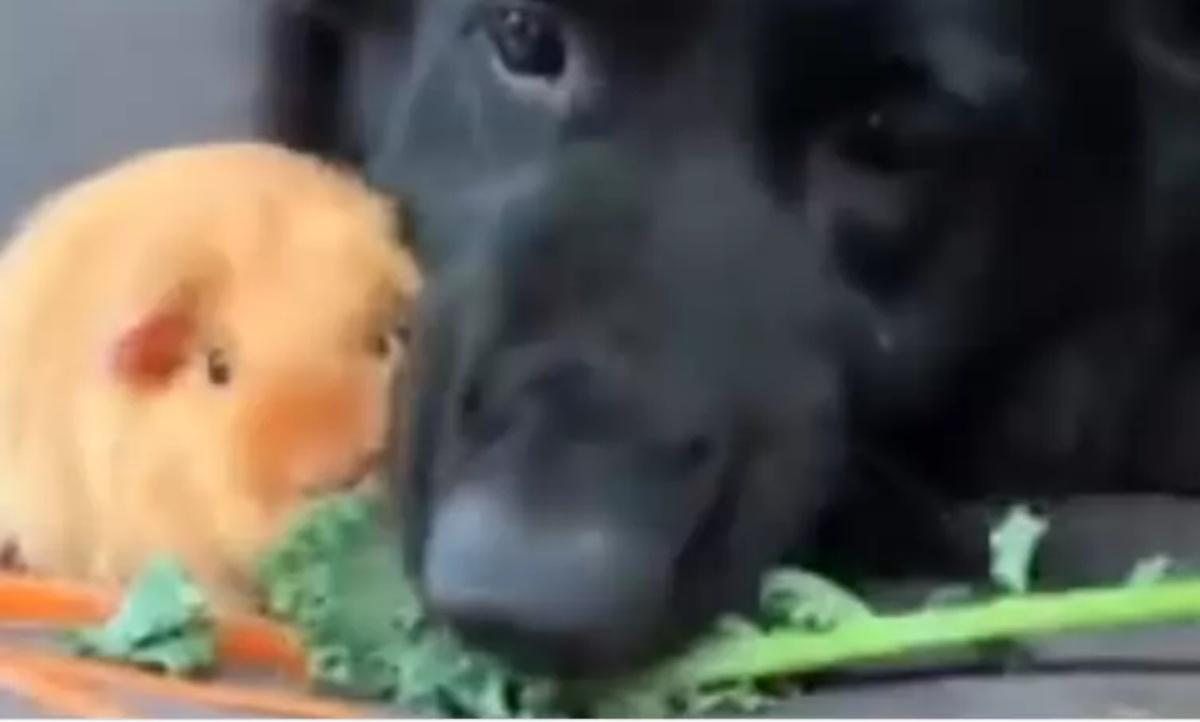 Il video del cane Marley
