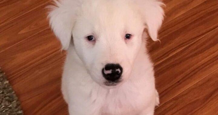 La commovente storia di Moxie, una cagnolina disabile nata in un allevamento abusivo