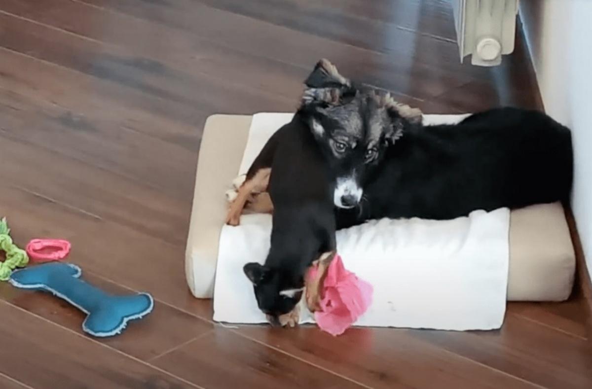 La commovente storia della cagnolina Nina