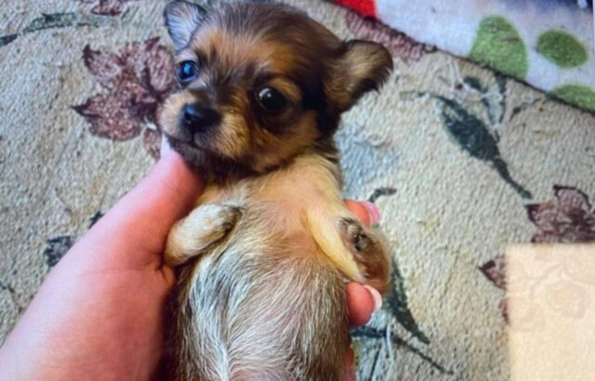 La storia della cagnolina Olivia
