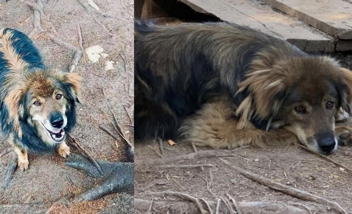 La storia del cane Peter