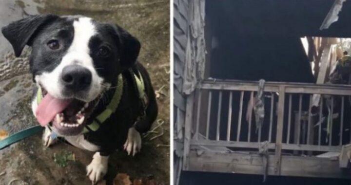 Rebel, la cagnolina trovata ancora viva dopo un incendio