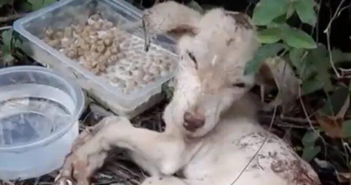 La storia del cane Recka, abbandonato e poi investito da un'auto