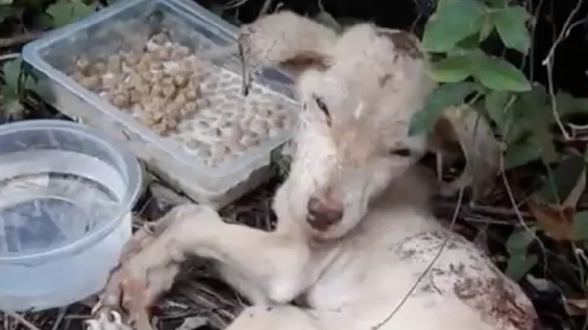 La storia del cane Recka