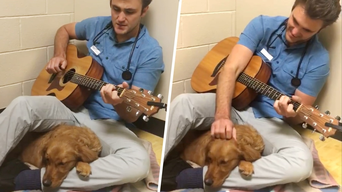 Il veterinario Ross Henderson