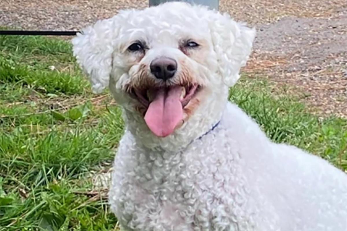 La trasformazione del cucciolo Tommy