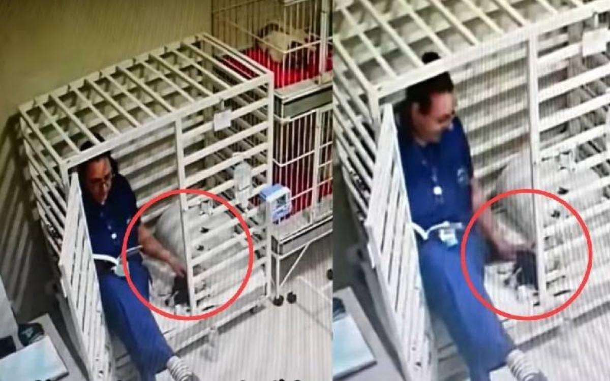 Il video del veterinario