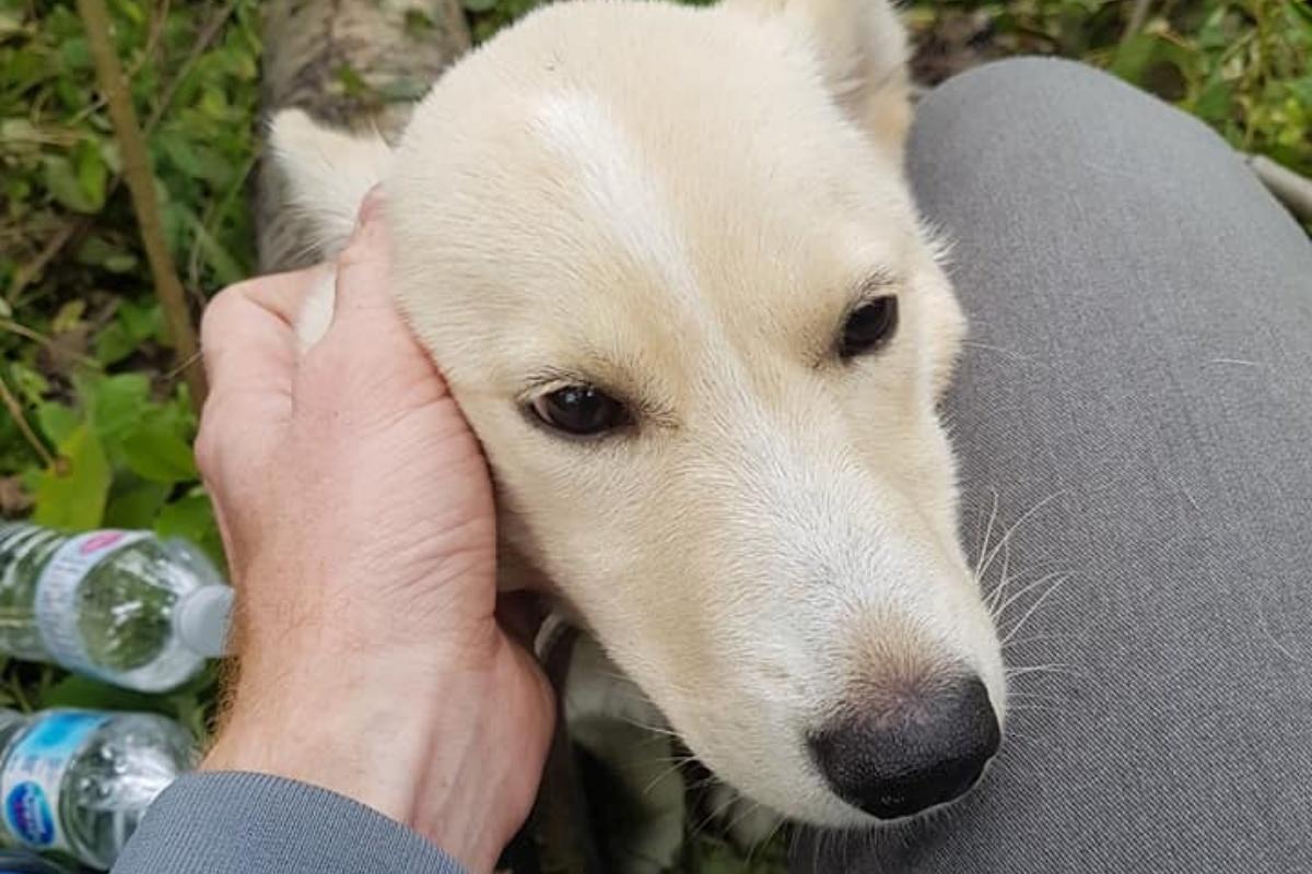 La storia del cagnolino Willow