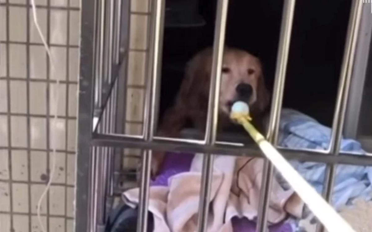 La storia del cane Zai Zai