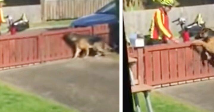 La clip virale di Kyza e del dolce postino: tutti considerano la cagnolina pericolosa