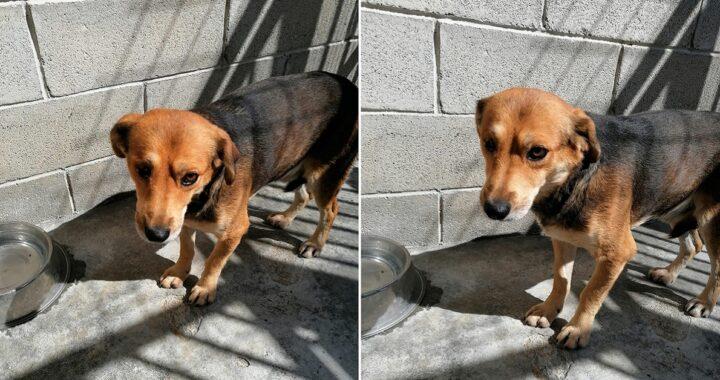 cane di 2 anni senza un occhio