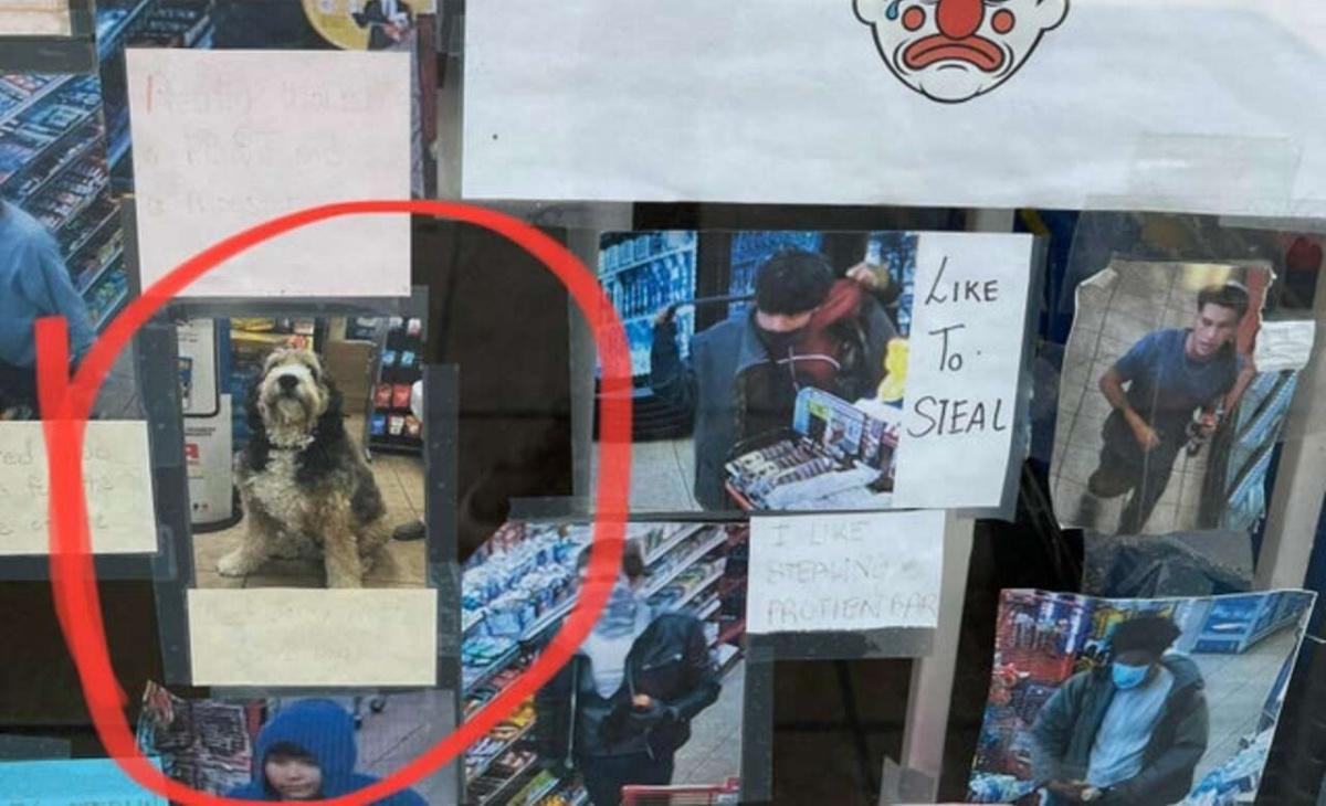 cane ladro finisce sul muro della vergogna