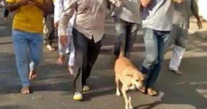 Cane randagio accompagna la sua amica speciale nel suo ultimo viaggio