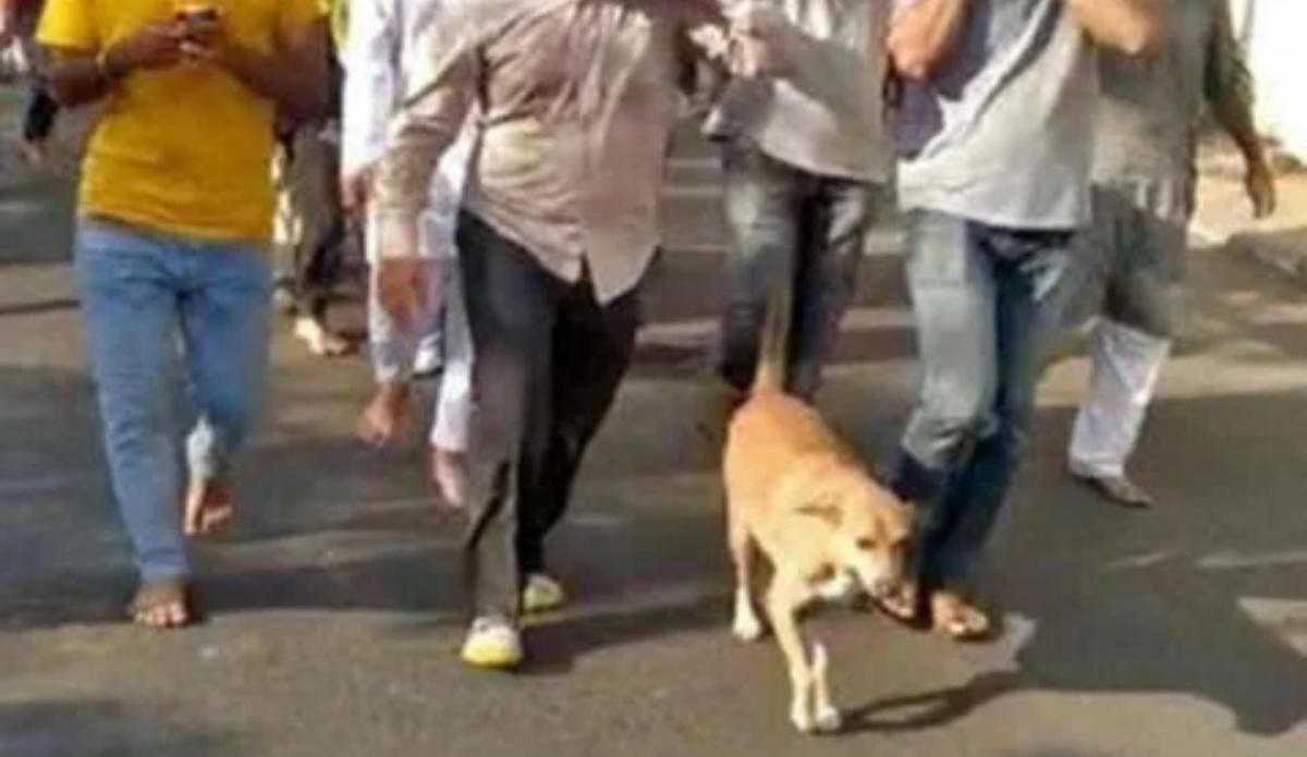 The story of a faithful stray dog