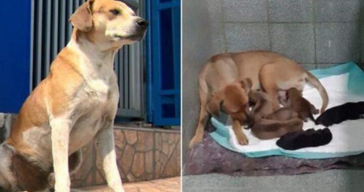 La bellissima storia di un cane randagio