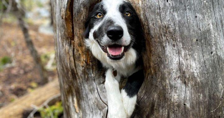 Cucciolo trova rifugio