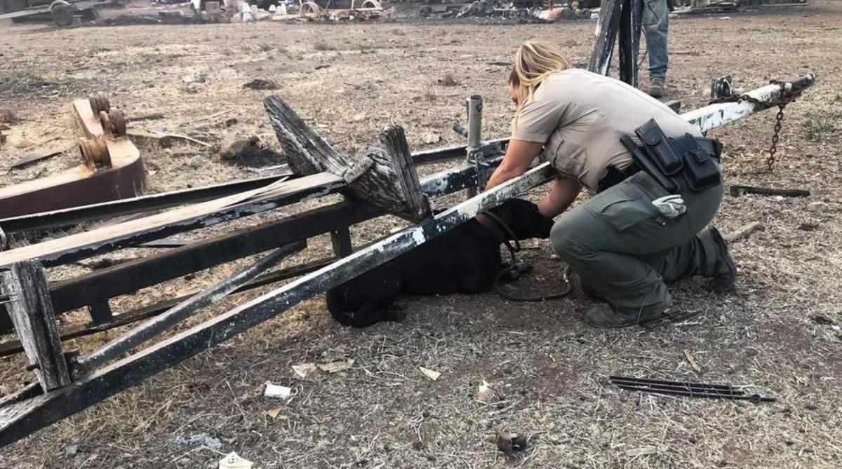 Due cani sopravvissuti incendio