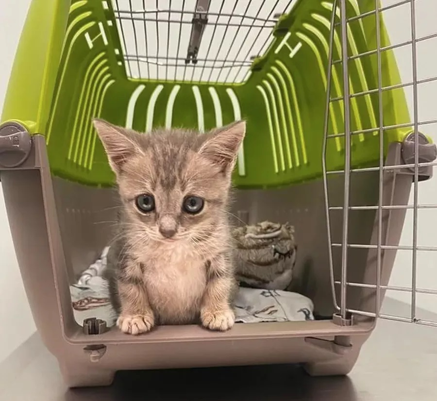 La piccola gatta di nome Minnie