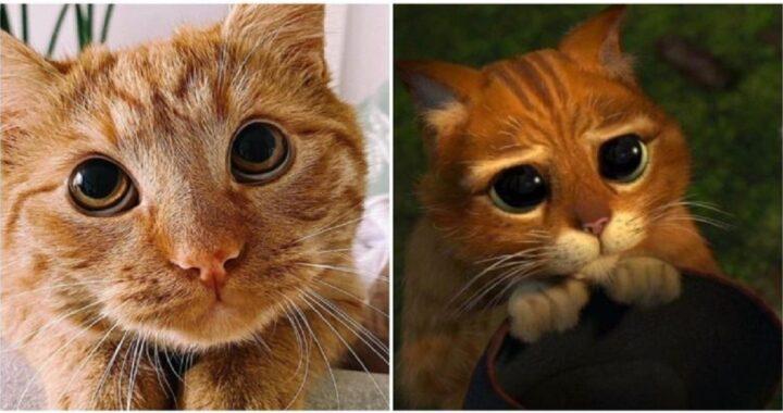 Il gatto con gli stivali è reale e ha successo online