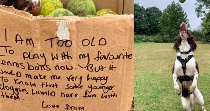 Il bellissimo gesto dell'anziano cane Jarvis: ha donato le sue palline da tennis