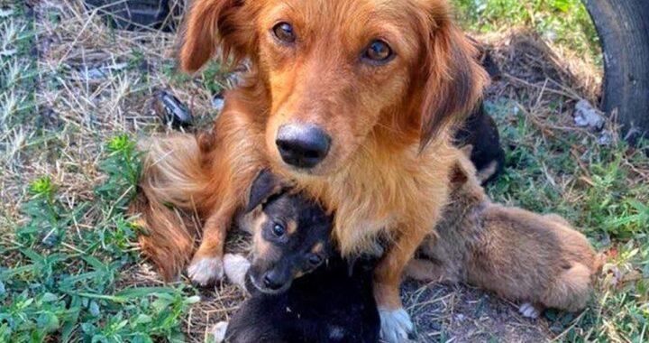 La straziante storia di Laska, la mamma cane a cui sono stati uccisi tutti i suoi cuccioli
