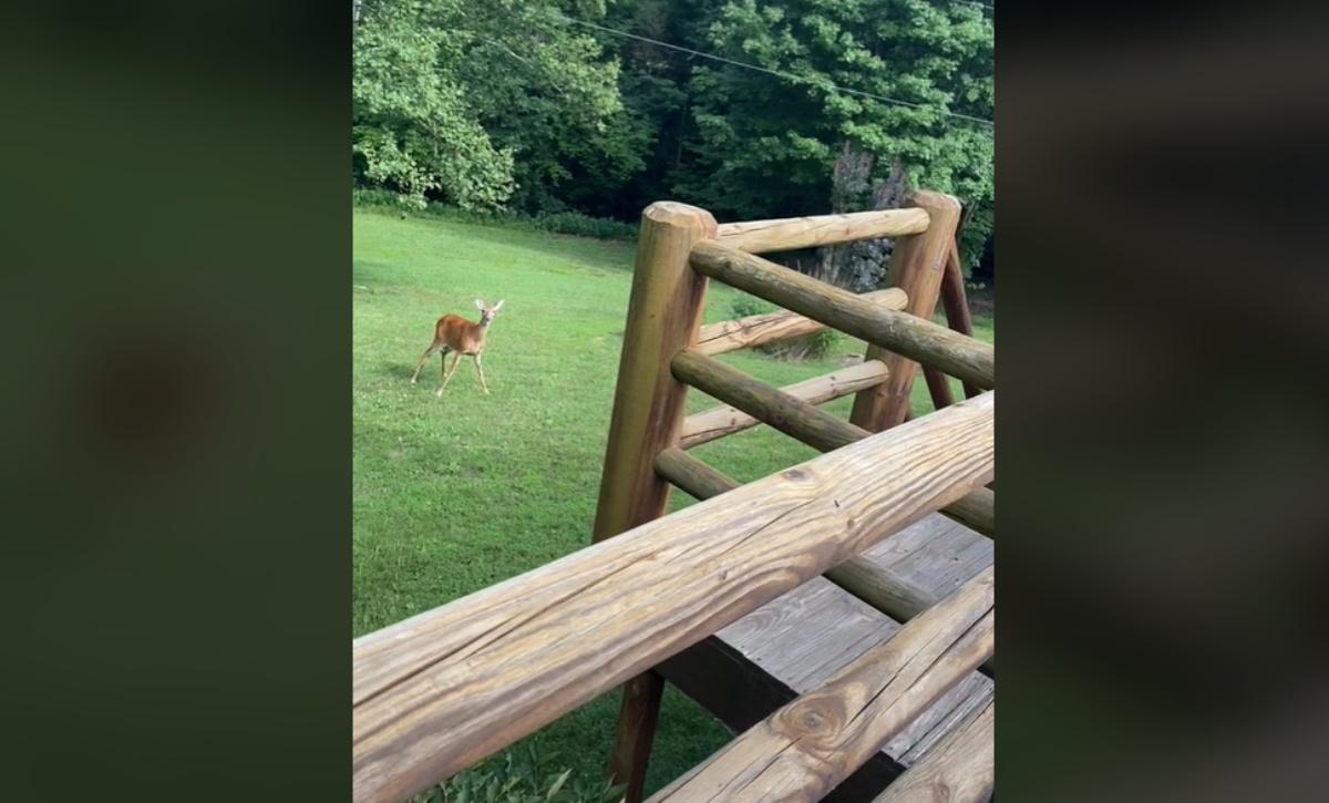 The video of mother deer