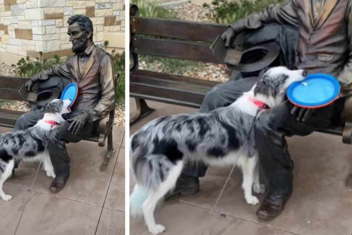 nova statua